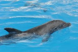 delfines 4
